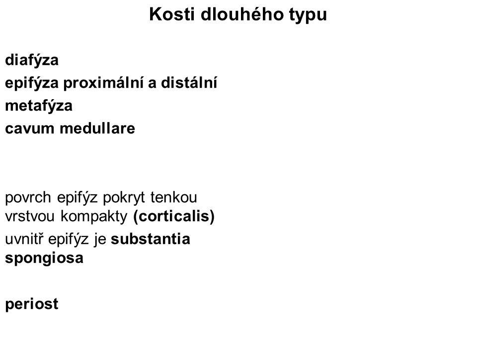 Kosti dlouhého typu diafýza epifýza proximální a distální metafýza