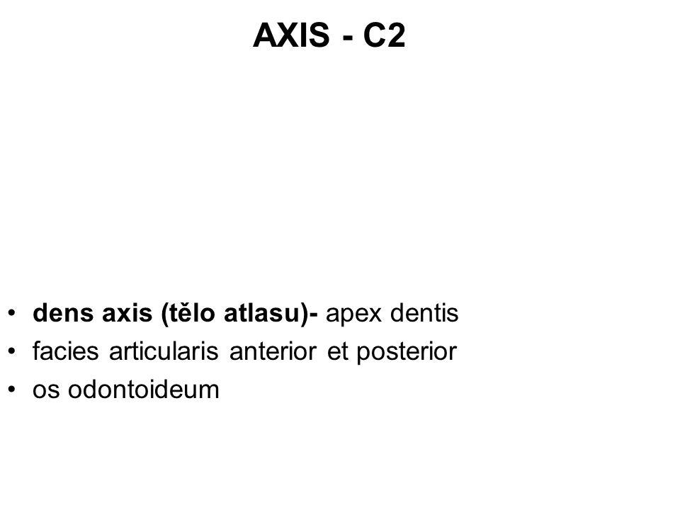 AXIS - C2 dens axis (tělo atlasu)- apex dentis