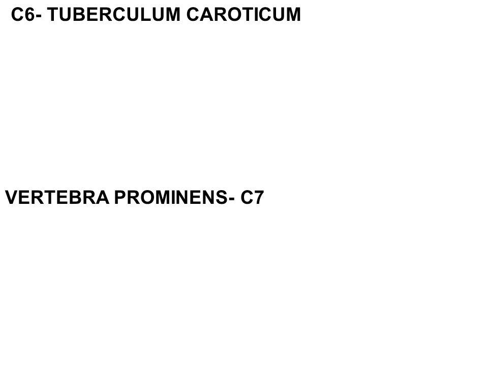 C6- TUBERCULUM CAROTICUM