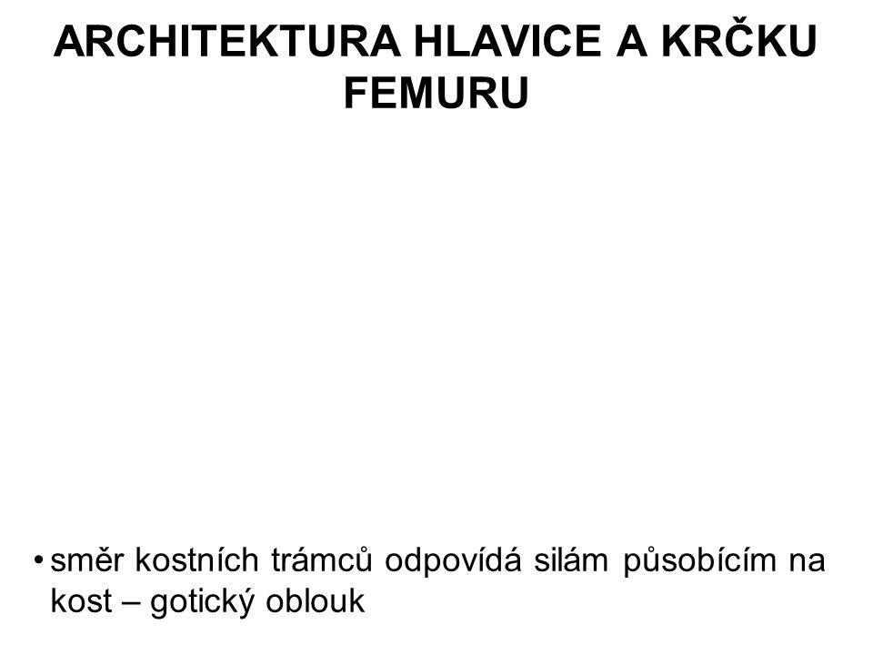 ARCHITEKTURA HLAVICE A KRČKU FEMURU