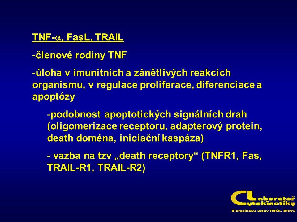 TNF-a, FasL, TRAIL členové rodiny TNF. úloha v imunitních a zánětlivých reakcích organismu, v regulace proliferace, diferenciace a apoptózy.