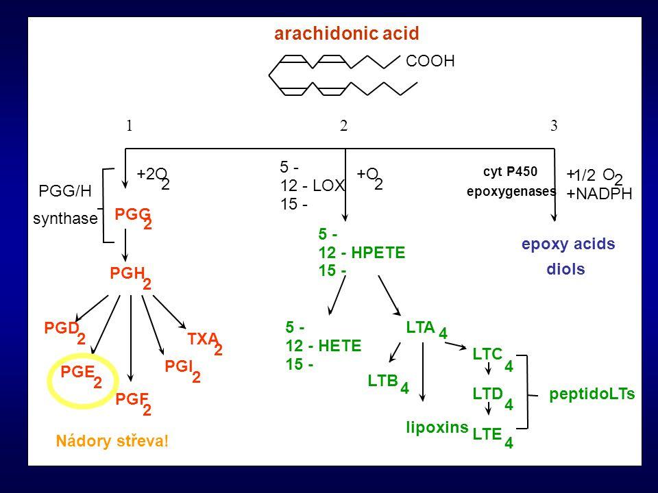 arachidonic acid COOH 1 2 3 5 - +2O +O + 1/2 O 2 2 2 12 - LOX PGG/H
