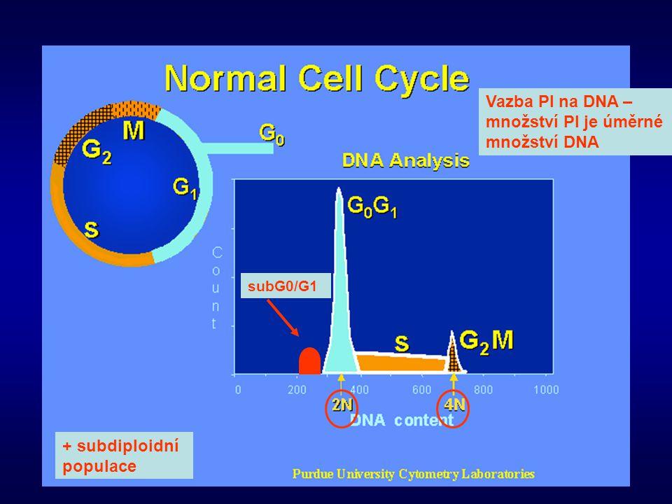 Vazba PI na DNA – množství PI je úměrné množství DNA