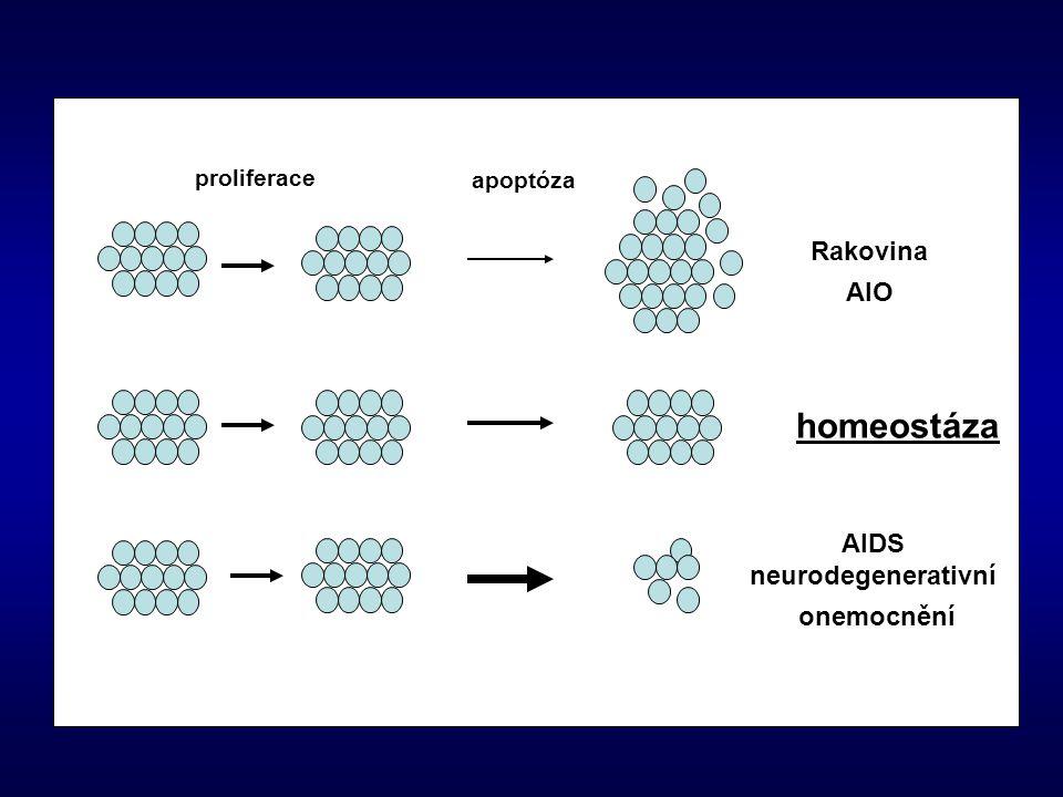 homeostáza Rakovina AIO AIDS neurodegenerativní onemocnění proliferace