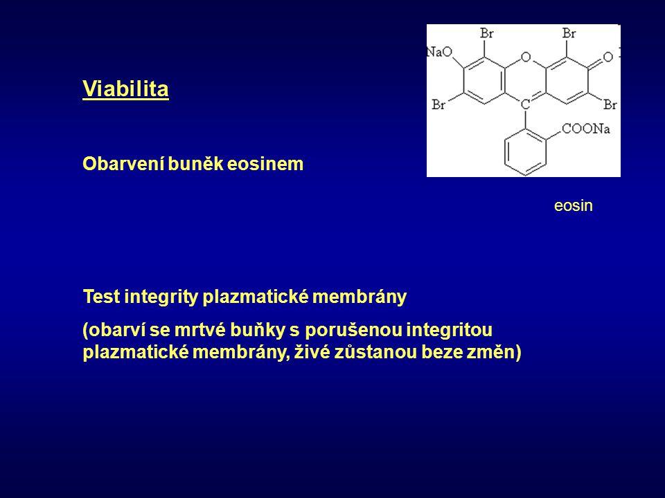 Viabilita Obarvení buněk eosinem Test integrity plazmatické membrány