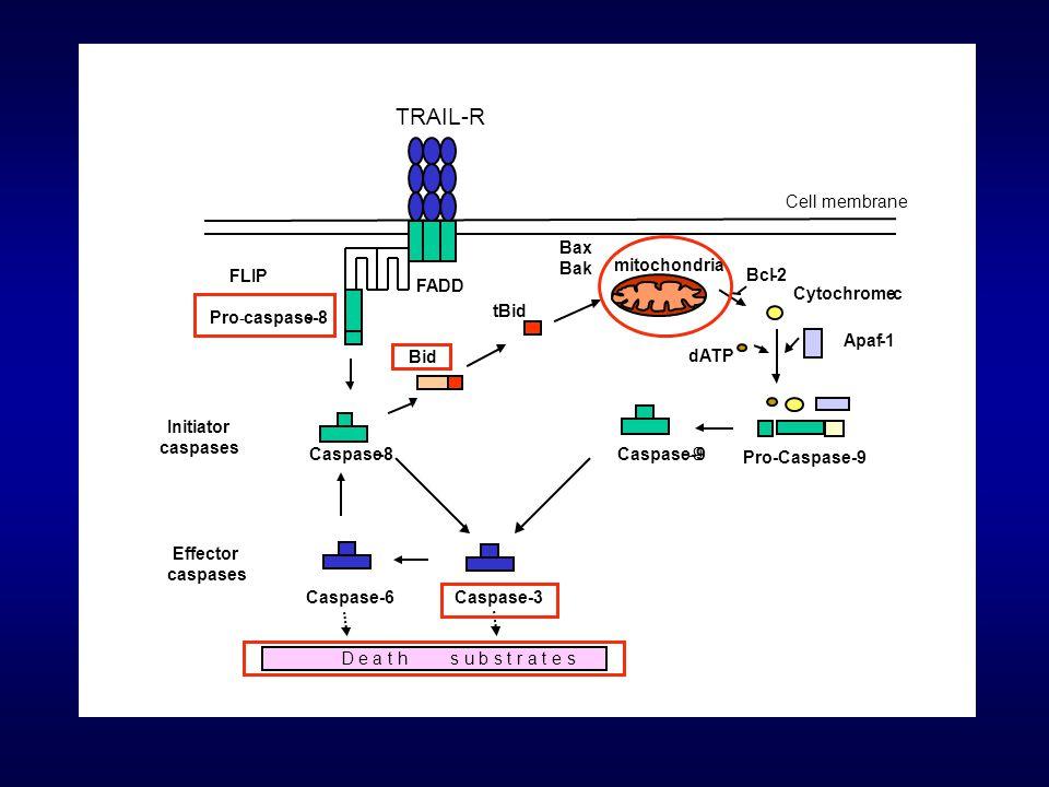 TRAIL-R Initiator caspases Effector Caspase -8 Caspase-9 -9 Caspase-3