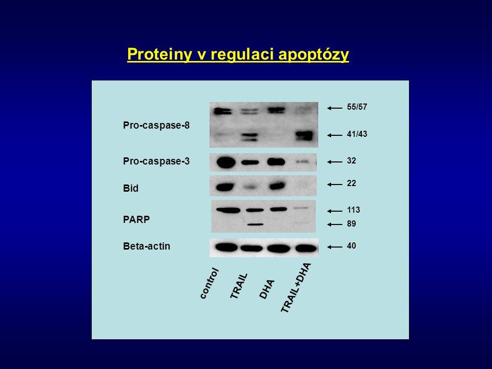 Proteiny v regulaci apoptózy
