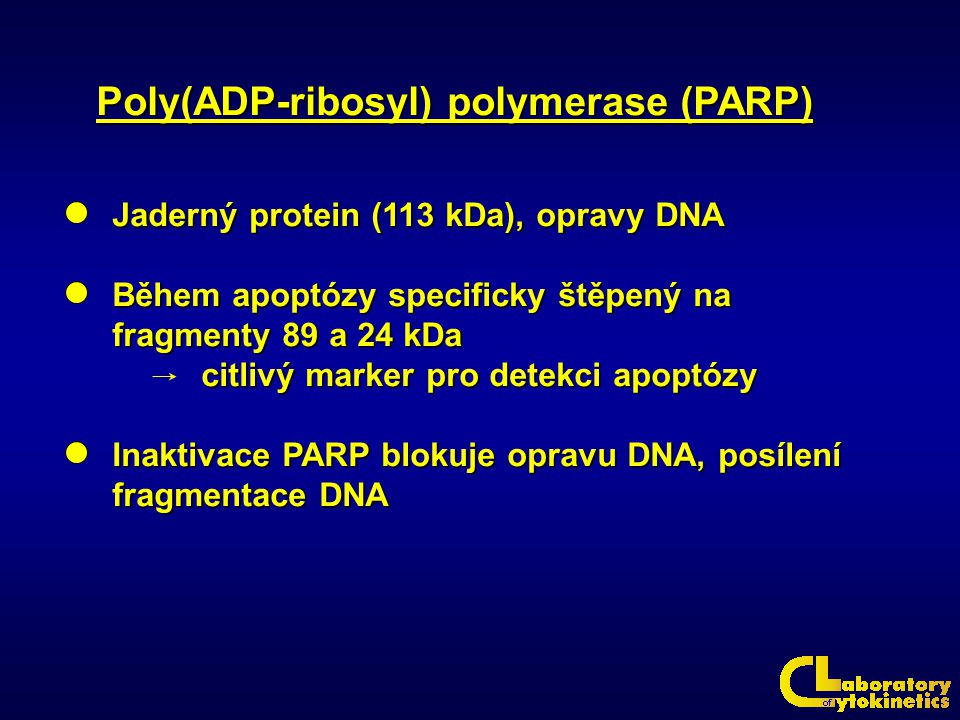 Poly(ADP-ribosyl) polymerase (PARP)