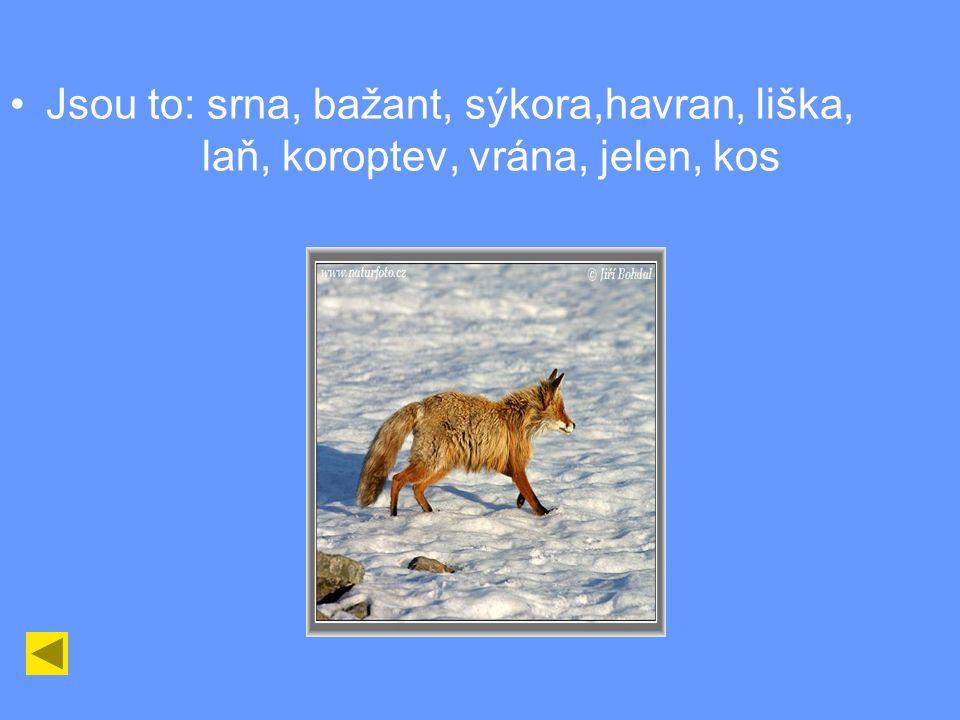 Jsou to: srna, bažant, sýkora,havran, liška,