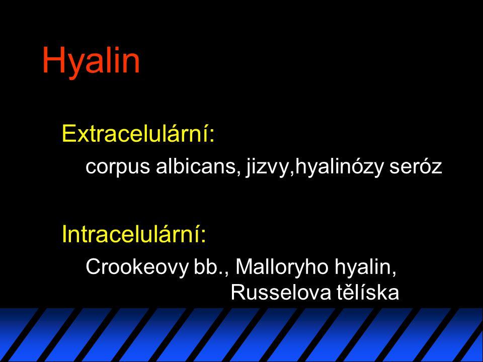Hyalin Extracelulární: Intracelulární: