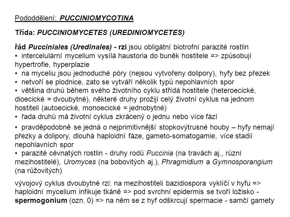 Pododdělení: PUCCINIOMYCOTINA