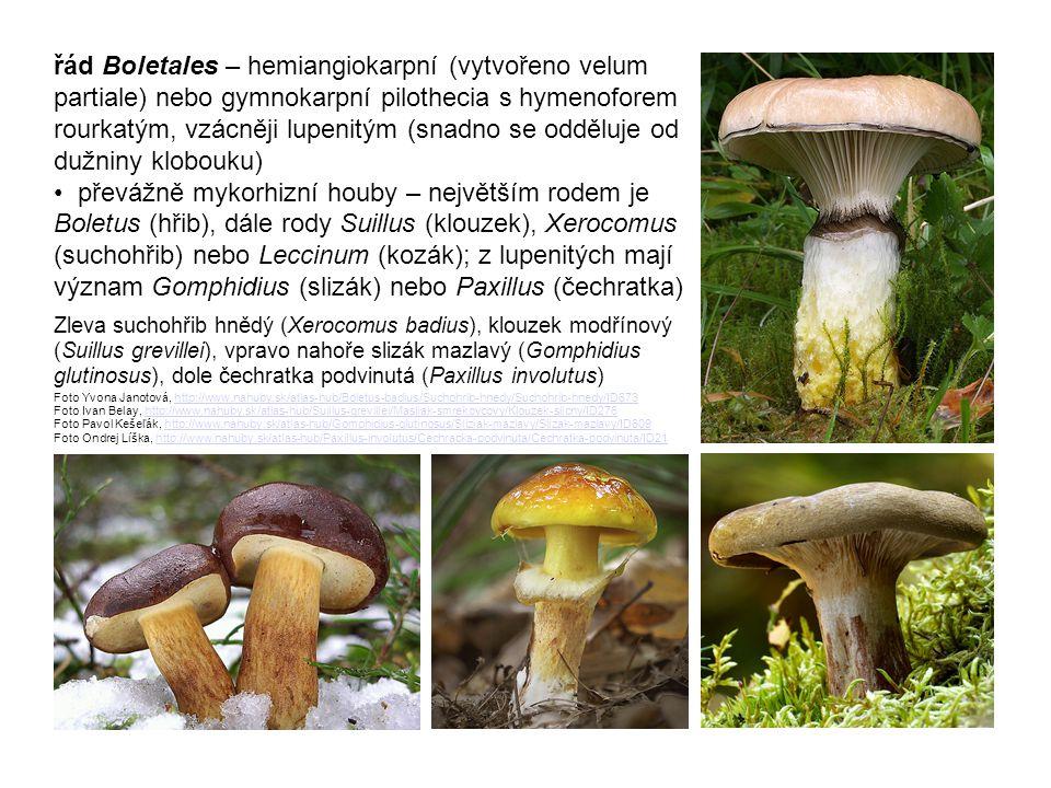řád Boletales – hemiangiokarpní (vytvořeno velum partiale) nebo gymnokarpní pilothecia s hymenoforem rourkatým, vzácněji lupenitým (snadno se odděluje od dužniny klobouku) • převážně mykorhizní houby – největším rodem je Boletus (hřib), dále rody Suillus (klouzek), Xerocomus (suchohřib) nebo Leccinum (kozák); z lupenitých mají význam Gomphidius (slizák) nebo Paxillus (čechratka)