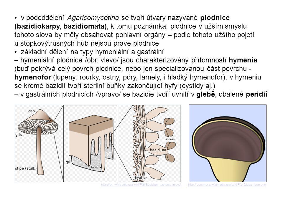 • v pododdělení Agaricomycotina se tvoří útvary nazývané plodnice (bazidiokarpy, bazidiomata); k tomu poznámka: plodnice v užším smyslu tohoto slova by měly obsahovat pohlavní orgány – podle tohoto užšího pojetí u stopkovýtrusných hub nejsou pravé plodnice • základní dělení na typy hymeniální a gastrální – hymeniální plodnice /obr. vlevo/ jsou charakterizovány přítomností hymenia (buď pokrývá celý povrch plodnice, nebo jen specializovanou část povrchu - hymenofor (lupeny, rourky, ostny, póry, lamely, i hladký hymenofor); v hymeniu se kromě bazidií tvoří sterilní buňky zakončující hyfy (cystidy aj.) – v gastrálních plodnicích /vpravo/ se bazidie tvoří uvnitř v glebě, obalené peridií