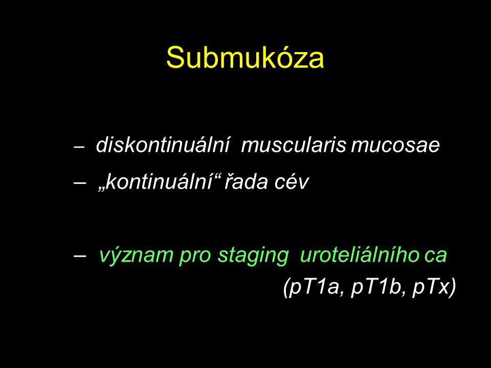 """Submukóza """"kontinuální řada cév"""