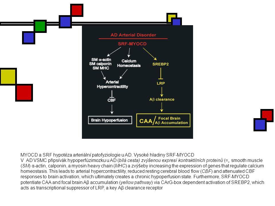 MYOCD a SRF hypotéza arteriální patofyziologie u AD