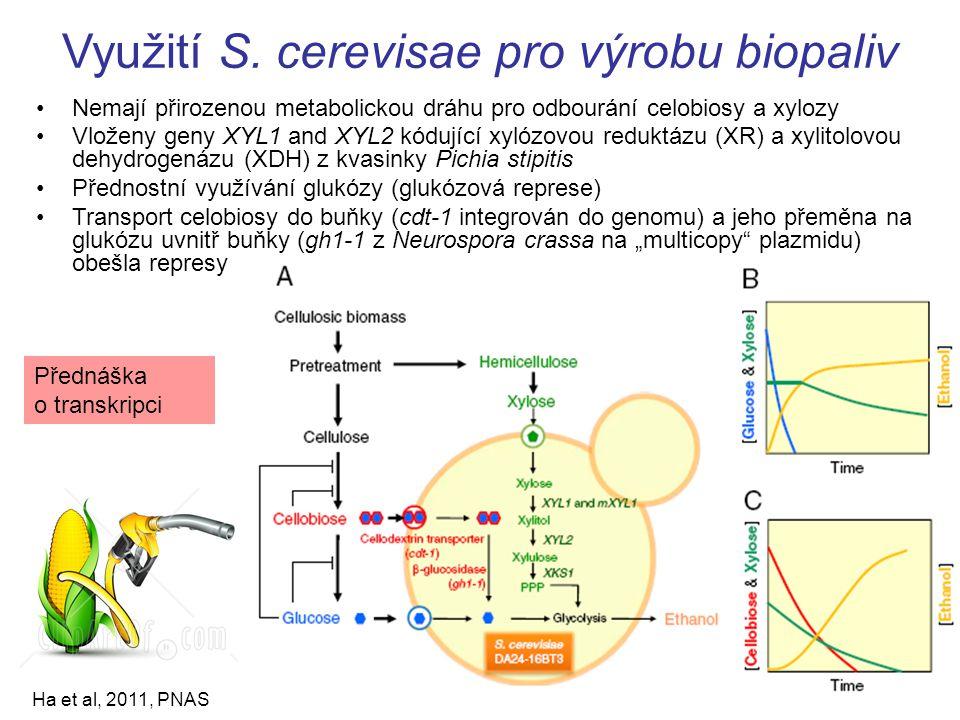 Využití S. cerevisae pro výrobu biopaliv