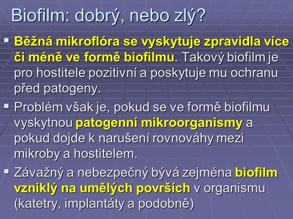 Biofilm: dobrý, nebo zlý