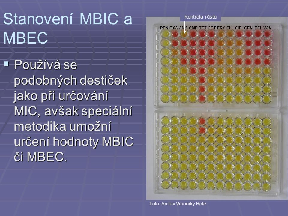 Stanovení MBIC a MBEC PEN OXA AMS CMP TET COT ERY CLI CIP GEN TEI VAN. Kontrola růstu.