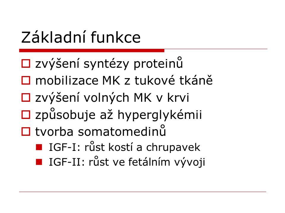 Základní funkce zvýšení syntézy proteinů mobilizace MK z tukové tkáně