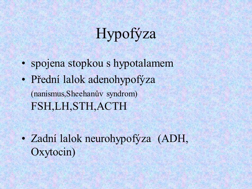 Hypofýza spojena stopkou s hypotalamem