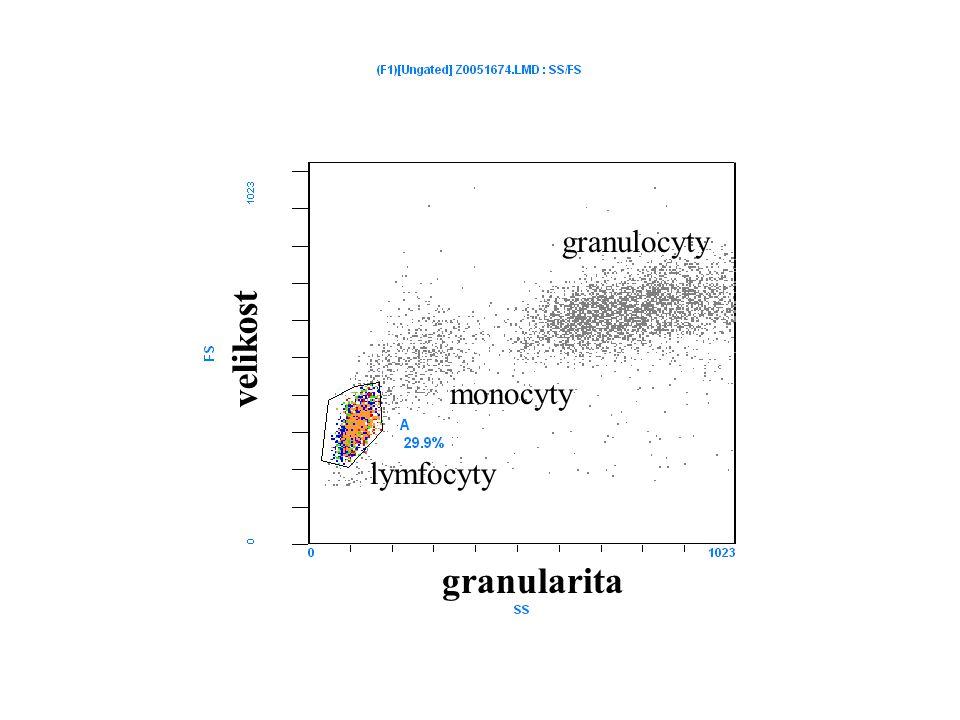 granulocyty velikost monocyty lymfocyty granularita