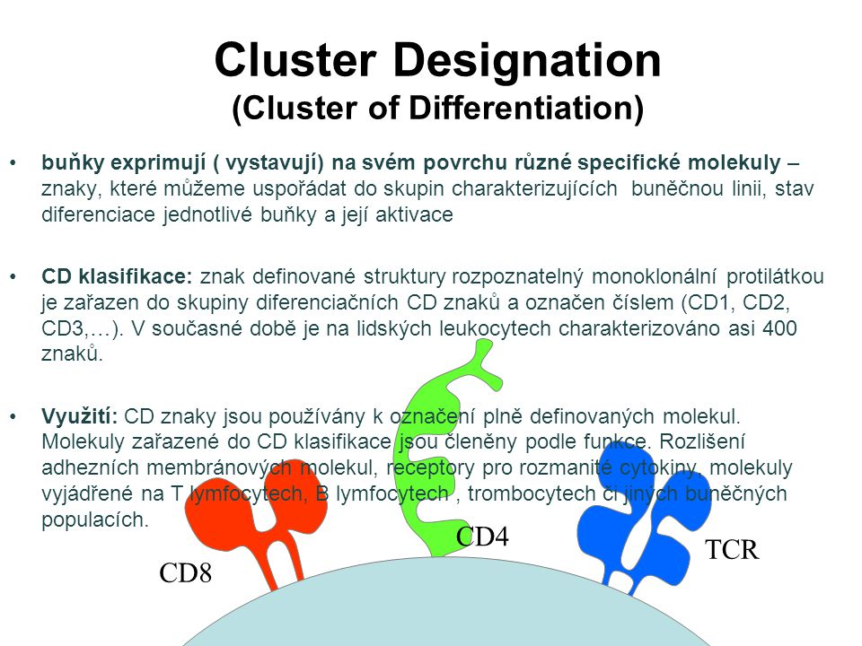 Cluster Designation (Cluster of Differentiation)
