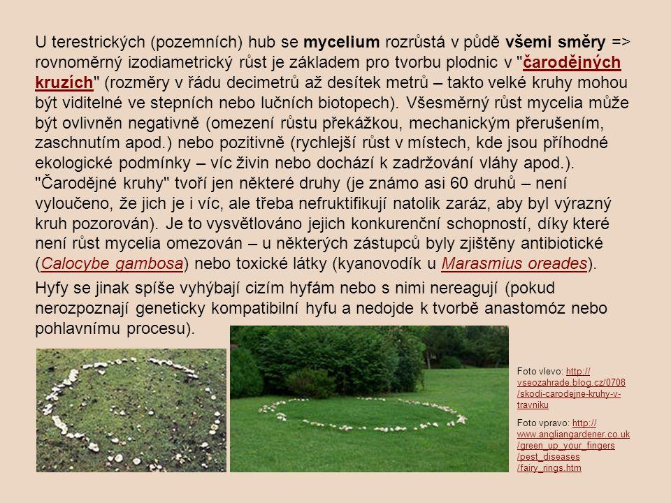 U terestrických (pozemních) hub se mycelium rozrůstá v půdě všemi směry => rovnoměrný izodiametrický růst je základem pro tvorbu plodnic v čarodějných kruzích (rozměry v řádu decimetrů až desítek metrů – takto velké kruhy mohou být viditelné ve stepních nebo lučních biotopech). Všesměrný růst mycelia může být ovlivněn negativně (omezení růstu překážkou, mechanickým přerušením, zaschnutím apod.) nebo pozitivně (rychlejší růst v místech, kde jsou příhodné ekologické podmínky – víc živin nebo dochází k zadržování vláhy apod.). Čarodějné kruhy tvoří jen některé druhy (je známo asi 60 druhů – není vyloučeno, že jich je i víc, ale třeba nefruktifikují natolik zaráz, aby byl výrazný kruh pozorován). Je to vysvětlováno jejich konkurenční schopností, díky které není růst mycelia omezován – u některých zástupců byly zjištěny antibiotické (Calocybe gambosa) nebo toxické látky (kyanovodík u Marasmius oreades).