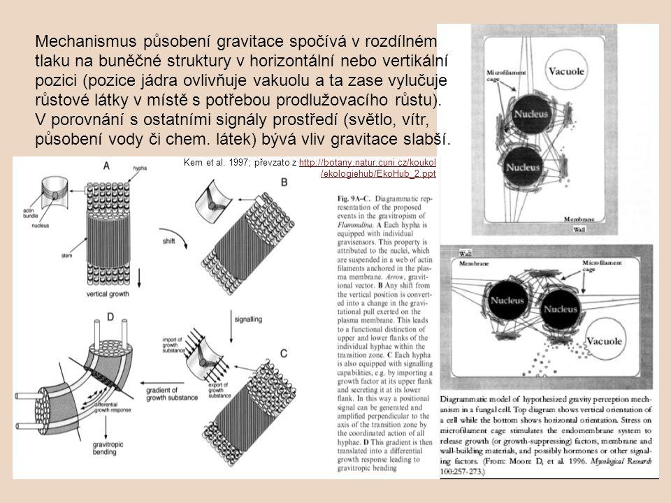 Mechanismus působení gravitace spočívá v rozdílném tlaku na buněčné struktury v horizontální nebo vertikální pozici (pozice jádra ovlivňuje vakuolu a ta zase vylučuje růstové látky v místě s potřebou prodlužovacího růstu). V porovnání s ostatními signály prostředí (světlo, vítr, působení vody či chem. látek) bývá vliv gravitace slabší.