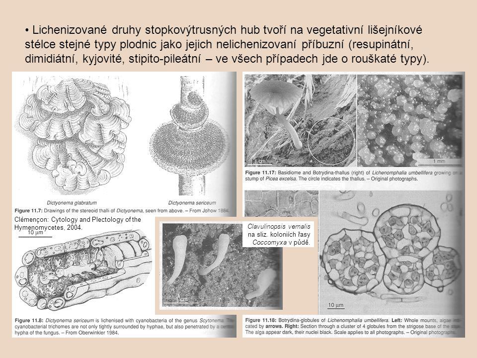 • Lichenizované druhy stopkovýtrusných hub tvoří na vegetativní lišejníkové stélce stejné typy plodnic jako jejich nelichenizovaní příbuzní (resupinátní, dimidiátní, kyjovité, stipito-pileátní – ve všech případech jde o rouškaté typy).