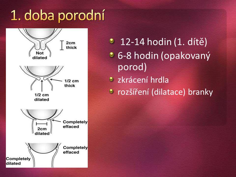 6-8 hodin (opakovaný porod)