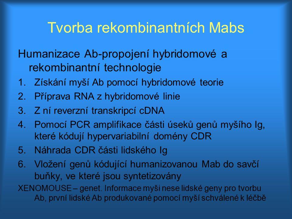 Tvorba rekombinantních Mabs