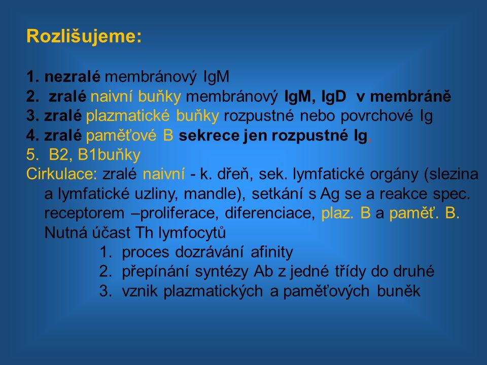 Rozlišujeme: nezralé membránový IgM