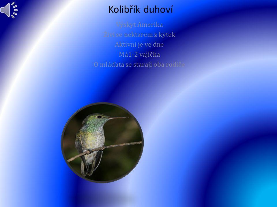 Kolibřík duhoví Výskyt Amerika Živí se nektarem z kytek