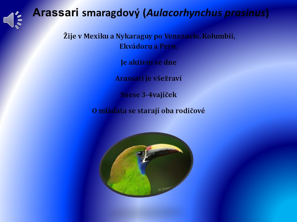 Arassari smaragdový (Aulacorhynchus prasinus)