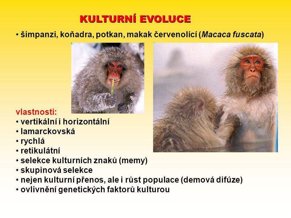 KULTURNÍ EVOLUCE šimpanzi, koňadra, potkan, makak červenolící (Macaca fuscata) vlastnosti: vertikální i horizontální.