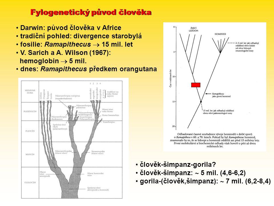 Fylogenetický původ člověka