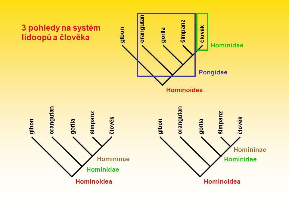 3 pohledy na systém lidoopů a člověka Hominoidea Hominidae Pongidae