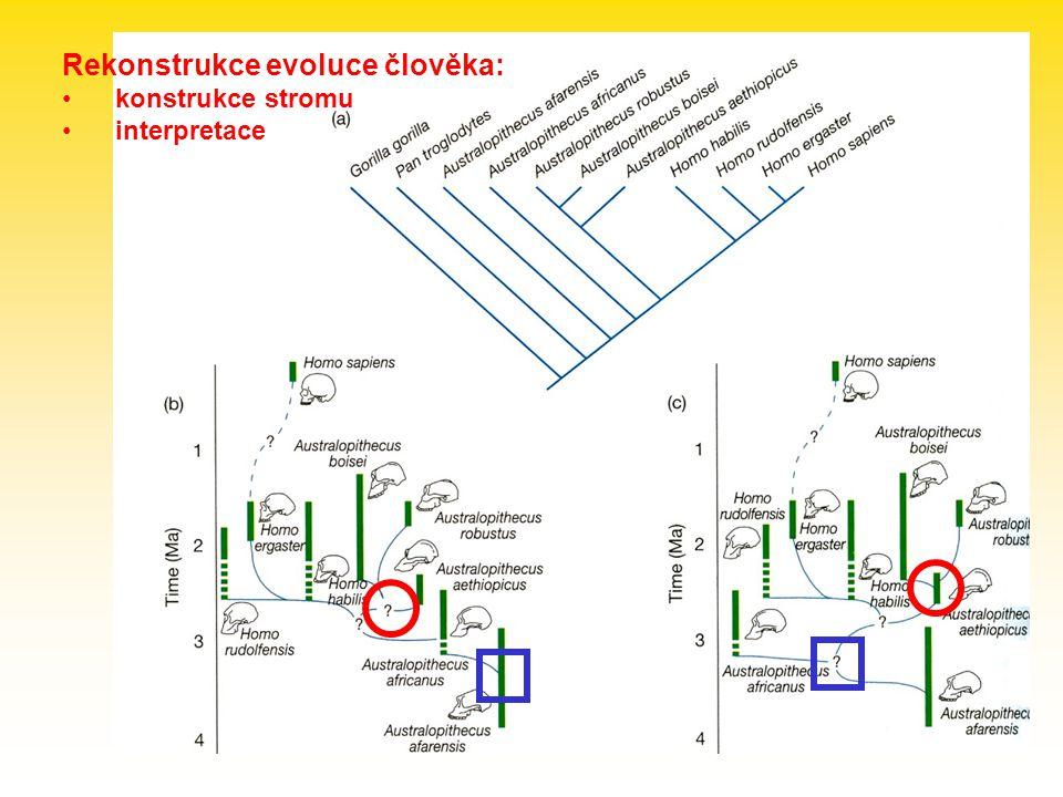 Rekonstrukce evoluce člověka: