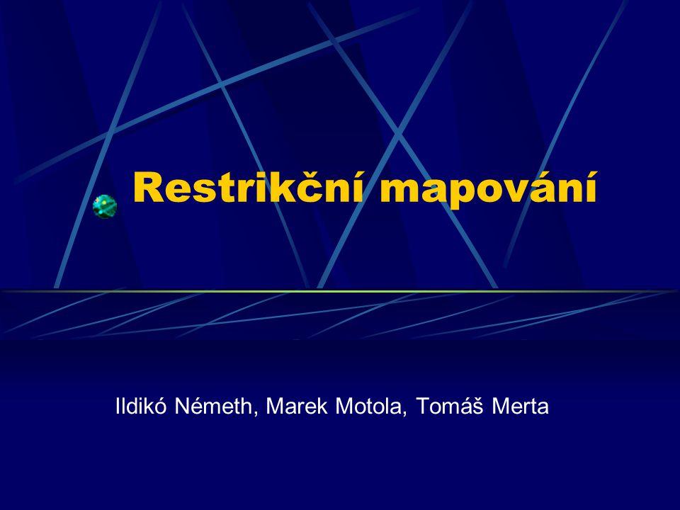 Ildikó Németh, Marek Motola, Tomáš Merta