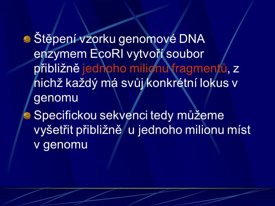 Štěpení vzorku genomové DNA enzymem EcoRI vytvoří soubor přibližně jednoho milionu fragmentů, z nichž každý má svůj konkrétní lokus v genomu