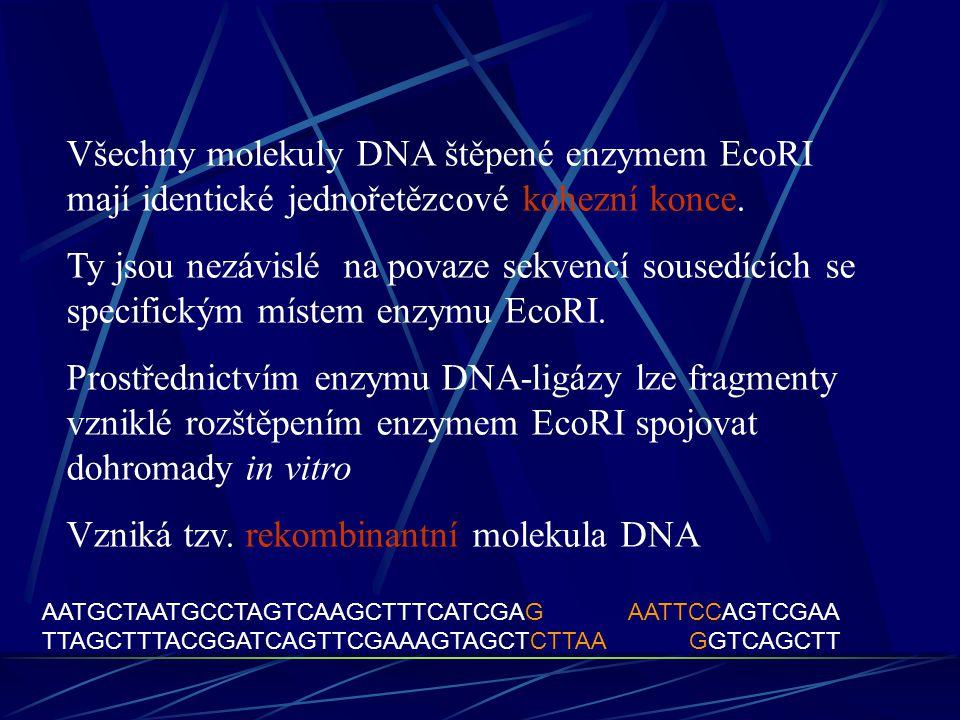 Vzniká tzv. rekombinantní molekula DNA