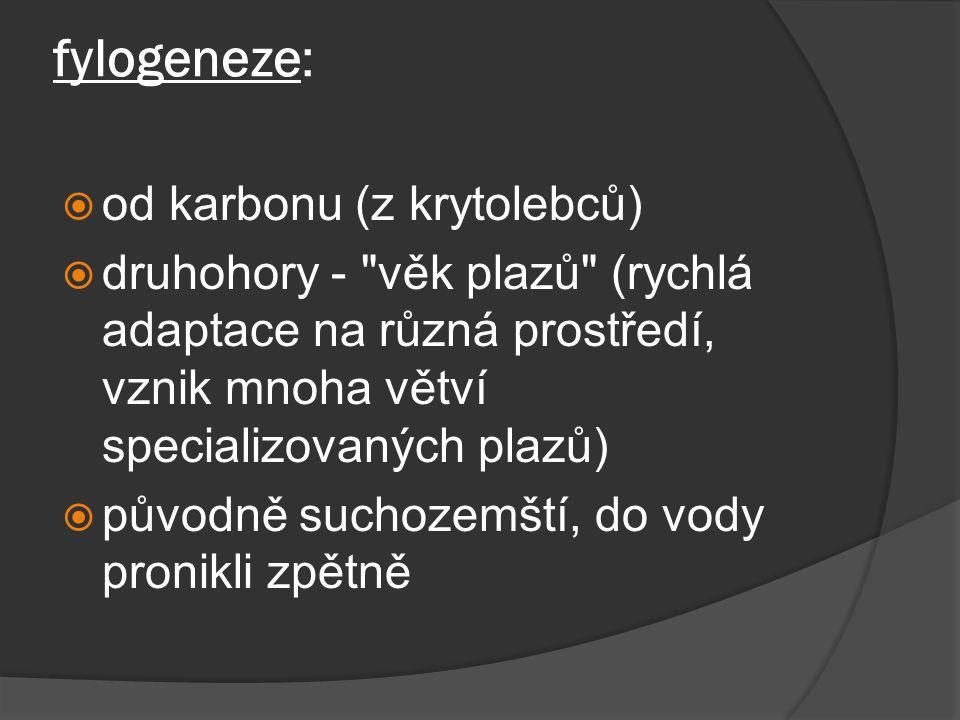 fylogeneze: od karbonu (z krytolebců)