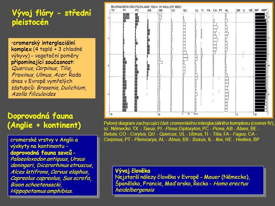 Vývoj flóry - střední pleistocén