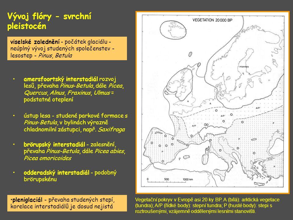 Vývoj flóry - svrchní pleistocén