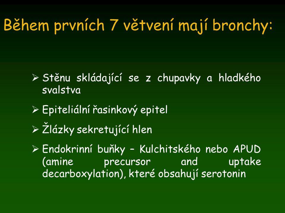 Během prvních 7 větvení mají bronchy: