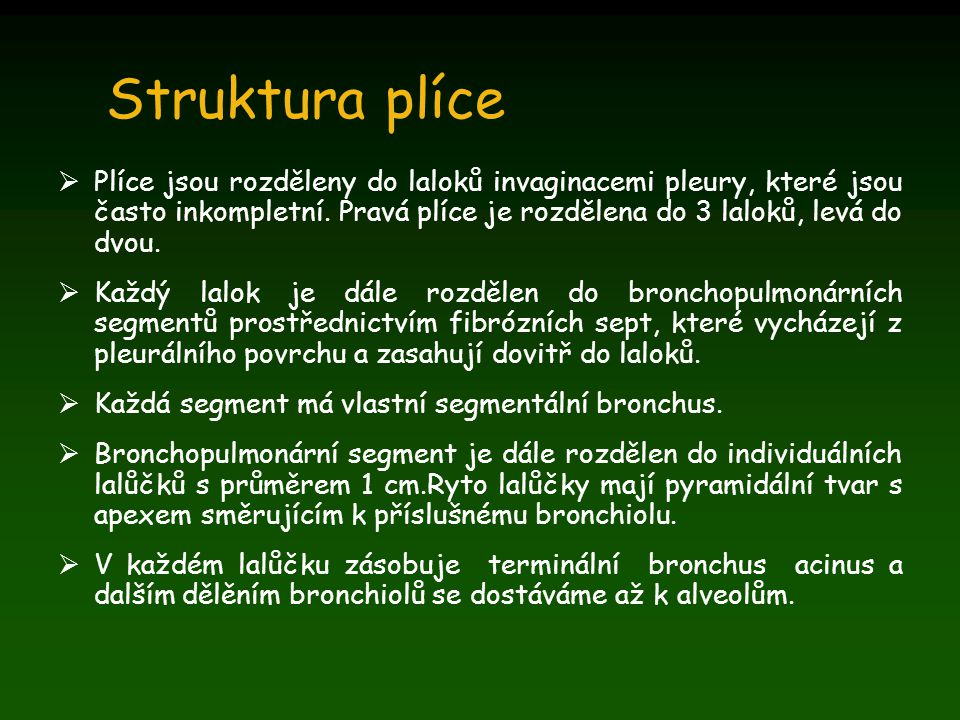 Struktura plíce