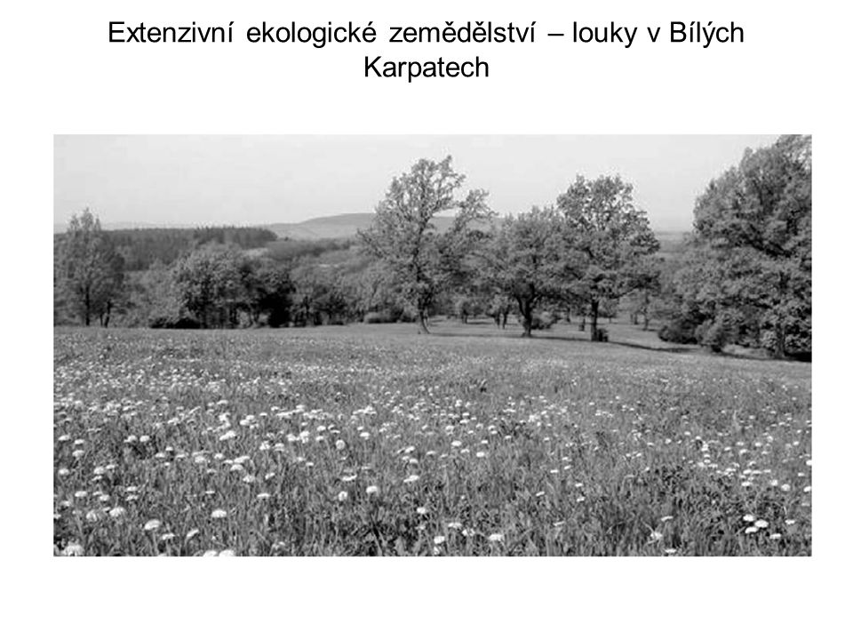 Extenzivní ekologické zemědělství – louky v Bílých Karpatech