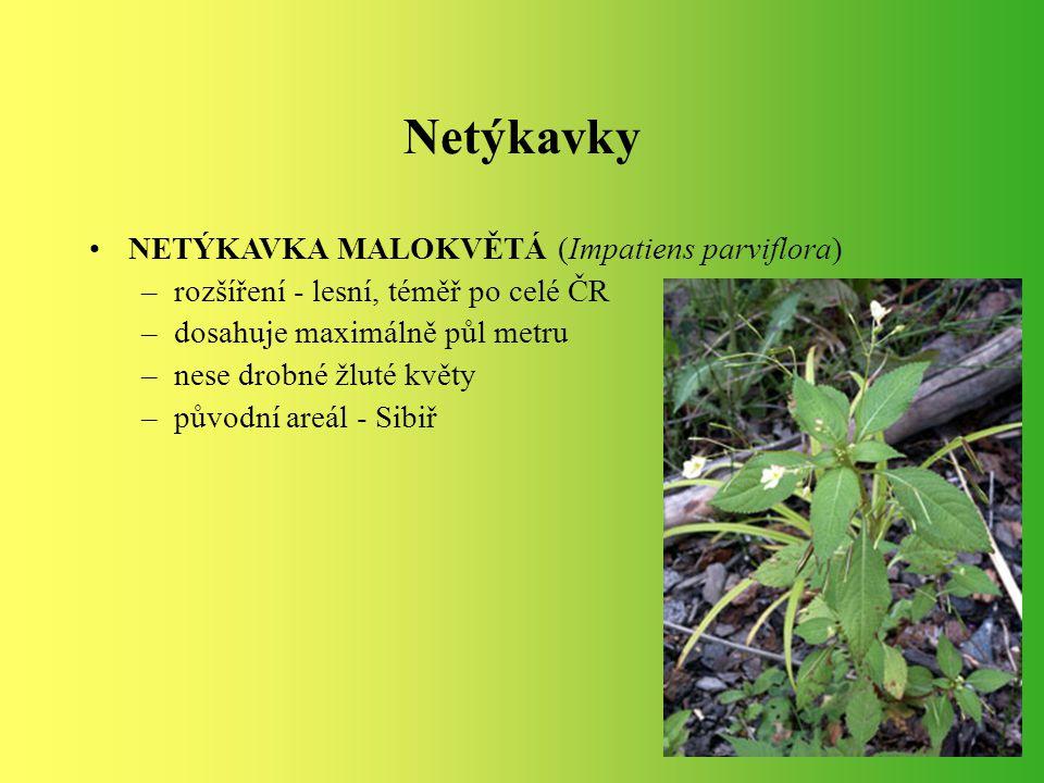 Netýkavky NETÝKAVKA MALOKVĚTÁ (Impatiens parviflora)