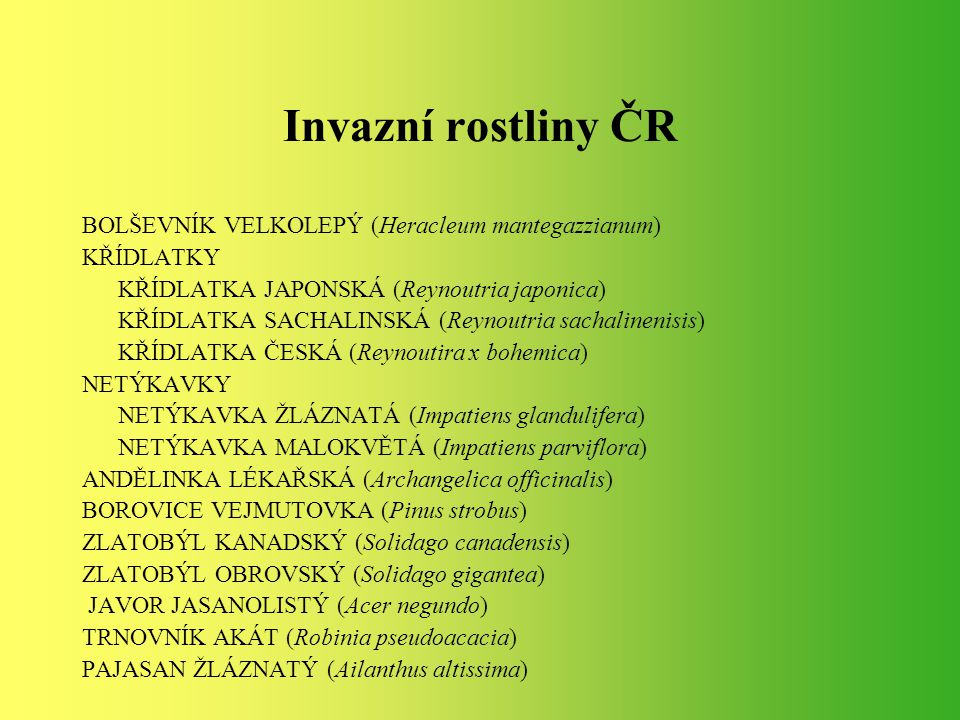 Invazní rostliny ČR BOLŠEVNÍK VELKOLEPÝ (Heracleum mantegazzianum)