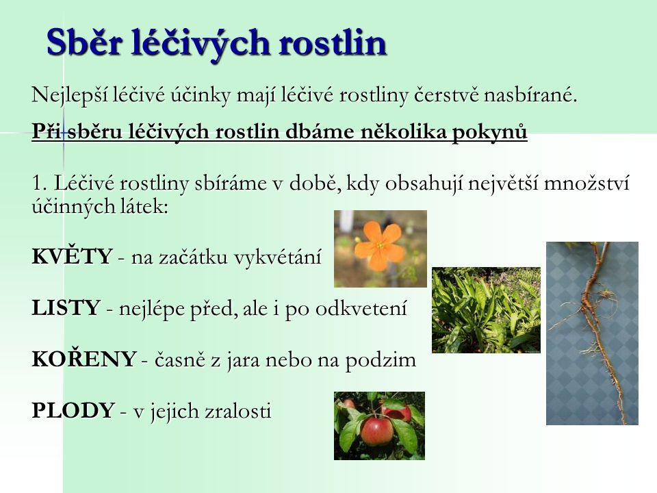 Sběr léčivých rostlin Při sběru léčivých rostlin dbáme několika pokynů